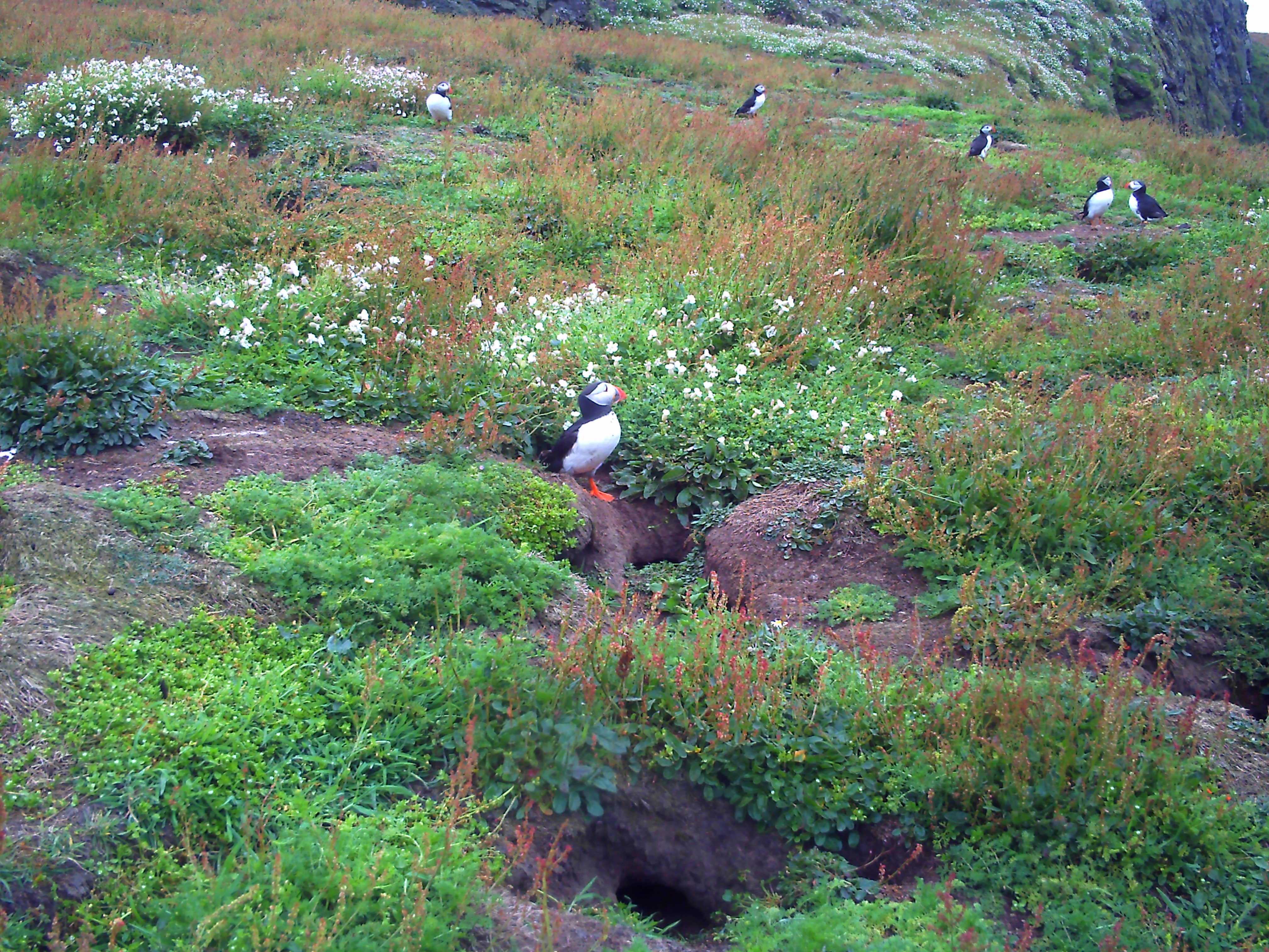 Puffins on Skomer Island - children, activities
